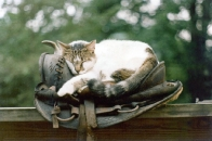 cat asleep in the saddle