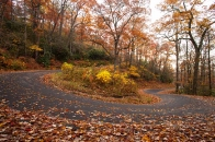 switchback on Horse Cove Rd. in autumn